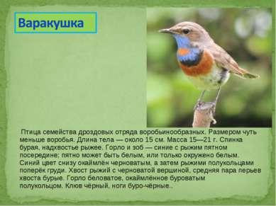 Птица семействадроздовыхотрядаворобьинообразных. Размером чуть меньше воро...