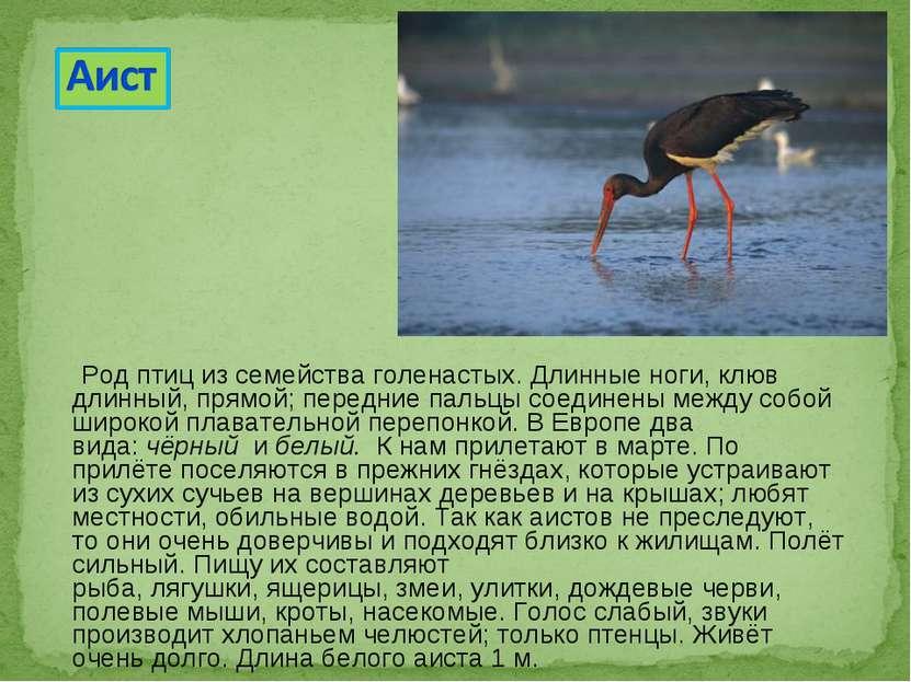 Род птиц из семейства голенастых. Длинные ноги, клюв длинный, прямой; передни...