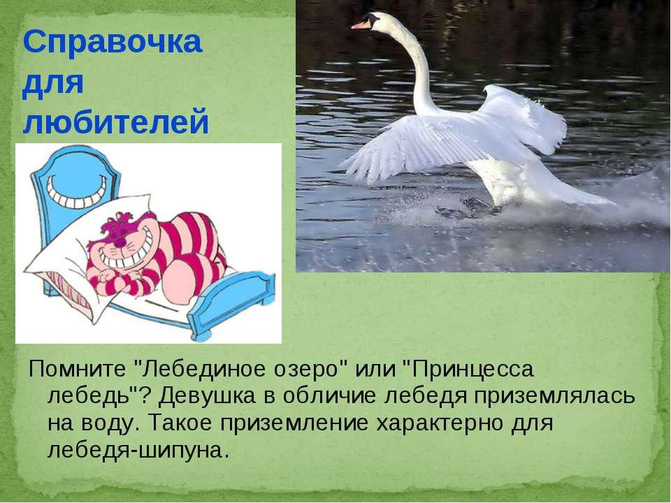 "Помните ""Лебединое озеро"" или ""Принцесса лебедь""? Девушка в обличие лебедя пр..."