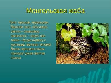 Монгольская жаба Тело тяжелое, неуклюжее. Верхняя часть тела имеет светло – о...