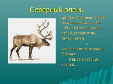 Северный олень Крупное животное, длина тела до 210 см, вес 80 – 100 кг. Окрас...