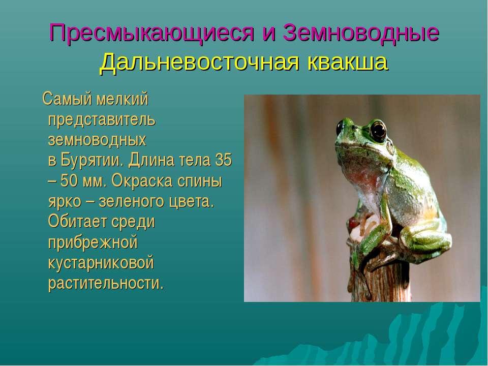 Пресмыкающиеся и Земноводные Дальневосточная квакша Самый мелкий представител...