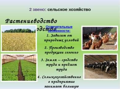 2 звено: сельское хозяйство Растениеводство Животноводство Отличительные особ...