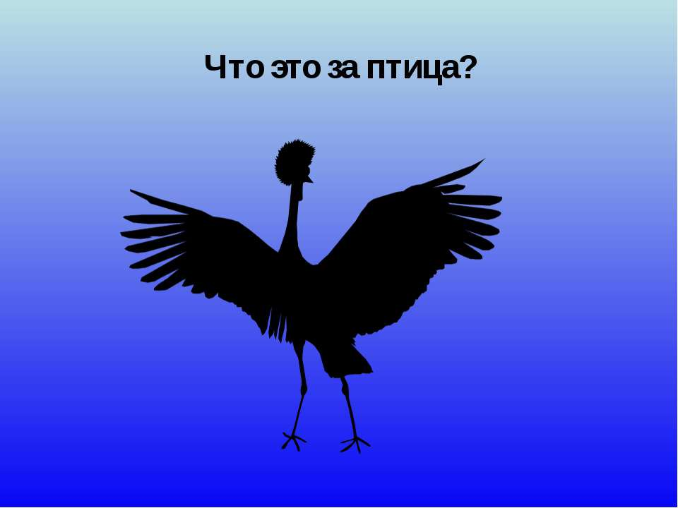 Что это за птица?