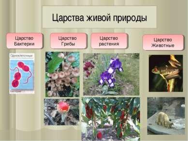 Царства живой природы Царство Бактерии Царство Грибы Царство растения Царство...