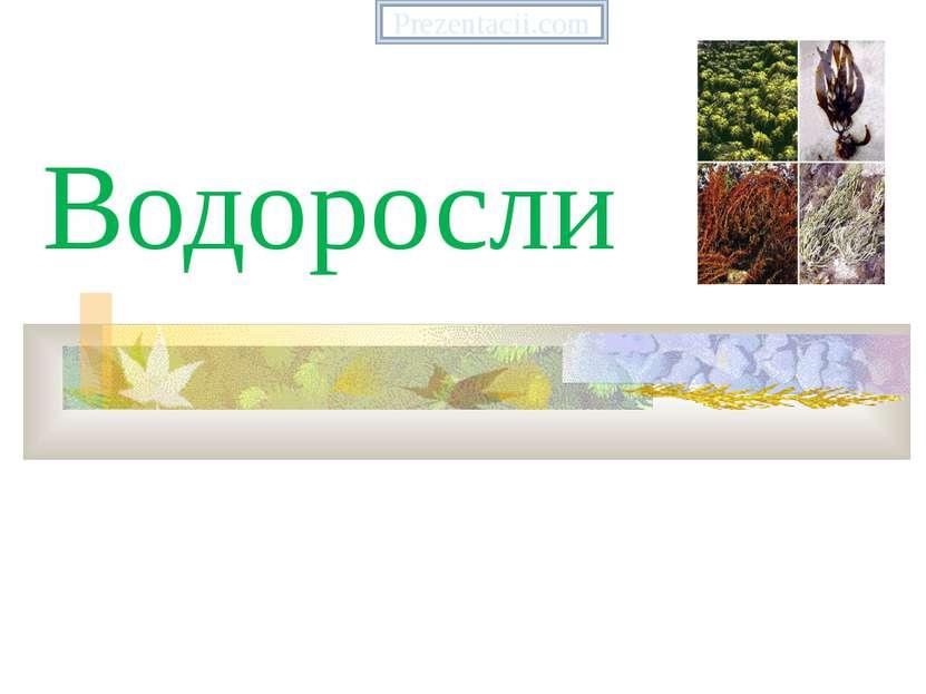 Водоросли Prezentacii.com
