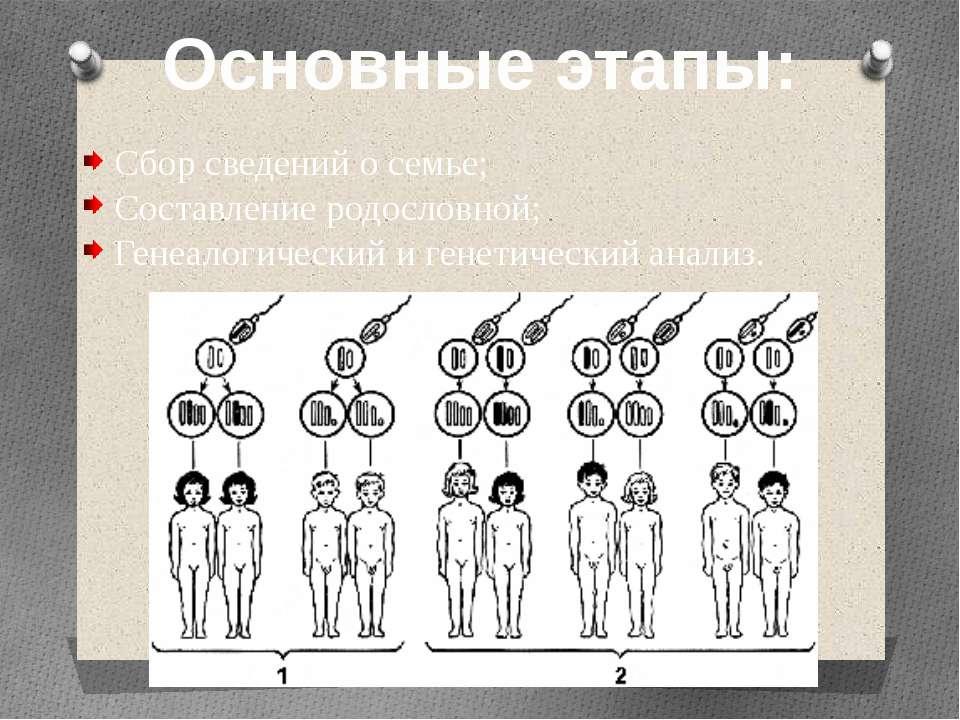 Основные этапы: Сбор сведений о семье; Составление родословной; Генеалогическ...