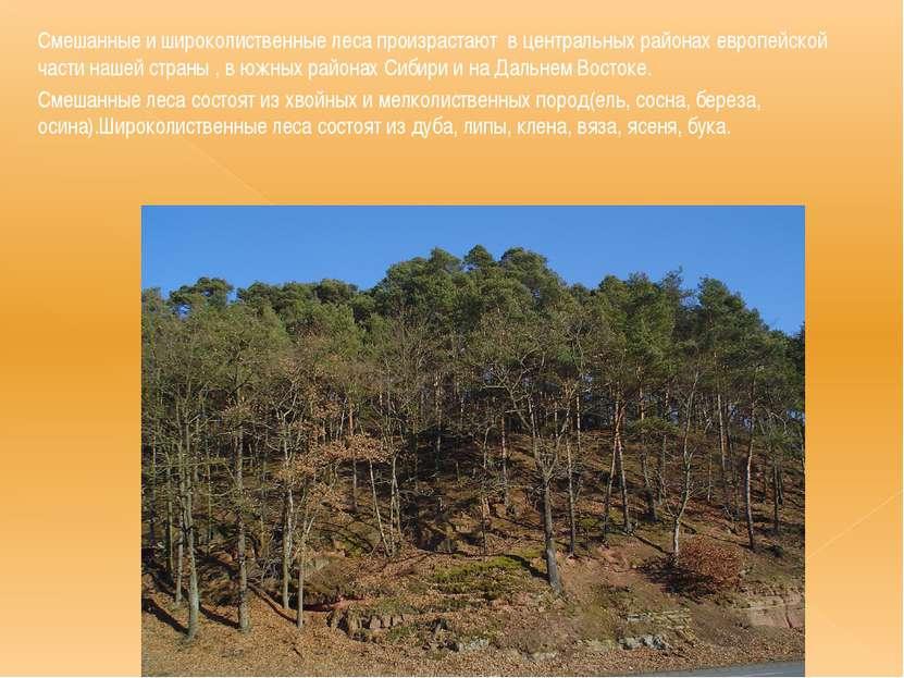 Смешанные и широколиственные леса произрастают в центральных районах европейс...