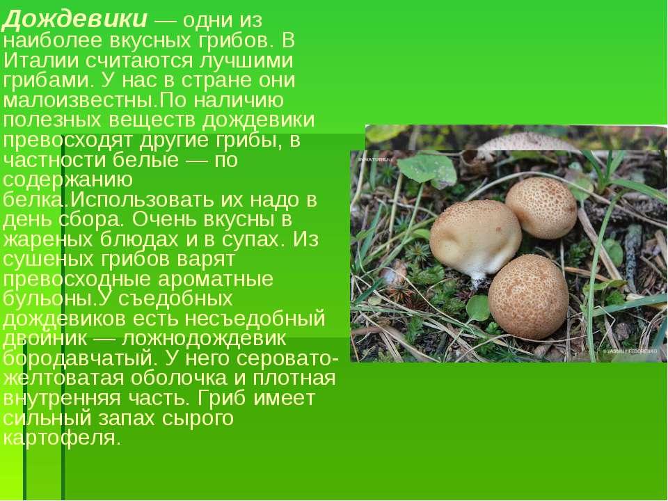 Дождевики — одни из наиболее вкусных грибов. В Италии считаются лучшими гриба...