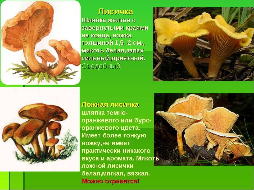 Ложная лисичка шляпка темно-оранжевого или буро-оранжевого цвета. Имеет более...