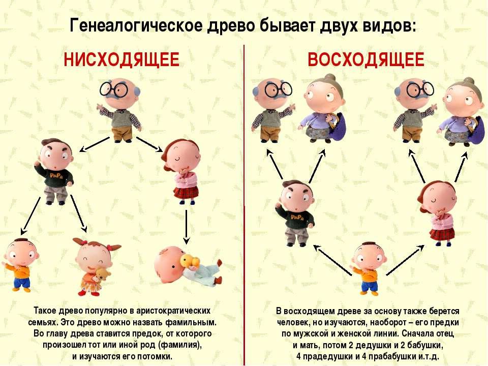 Генеалогическое древо бывает двух видов: НИСХОДЯЩЕЕ ВОСХОДЯЩЕЕ Такое древо п...