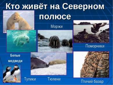 Кто живёт на Северном полюсе Поморники Тупики Тюлени Моржи Белые медведи Птич...