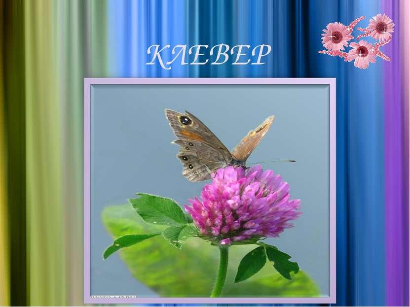 КЛЕВЕР