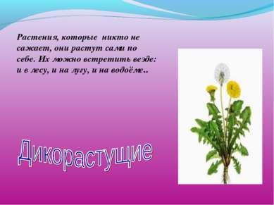 Растения, которые никто не сажает, они растут сами по себе. Их можно встретит...