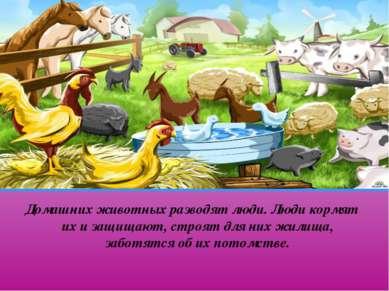 Домашних животных разводят люди. Люди кормят их и защищают, строят для них жи...