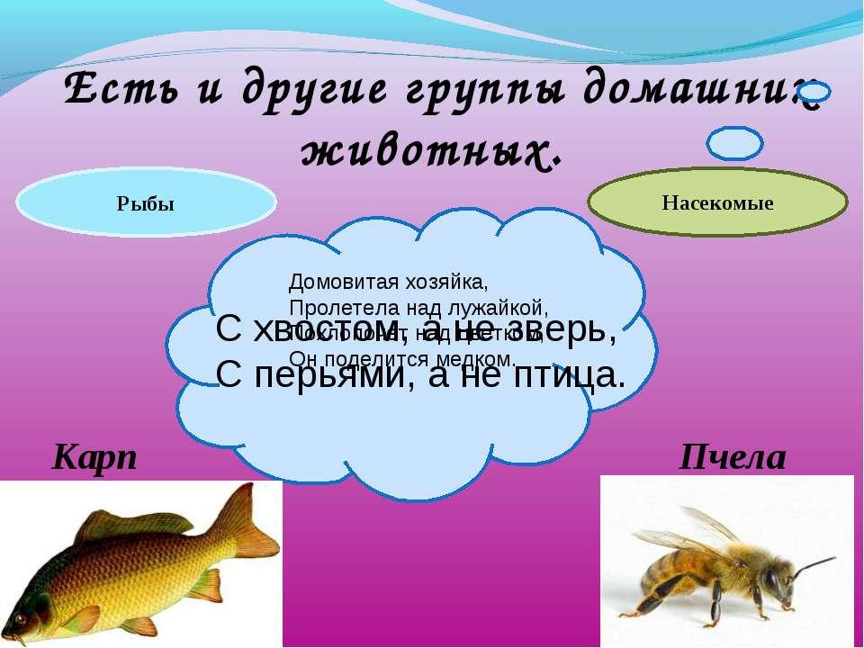 Есть и другие группы домашних животных. С хвостом, а не зверь, С перьями, а н...