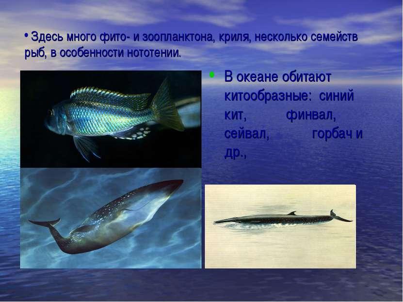 Здесь много фито- и зоопланктона, криля, несколько семейств рыб, в особенност...
