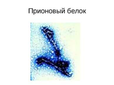 Прионовый белок