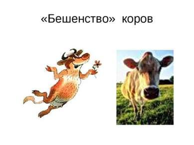 «Бешенство» коров