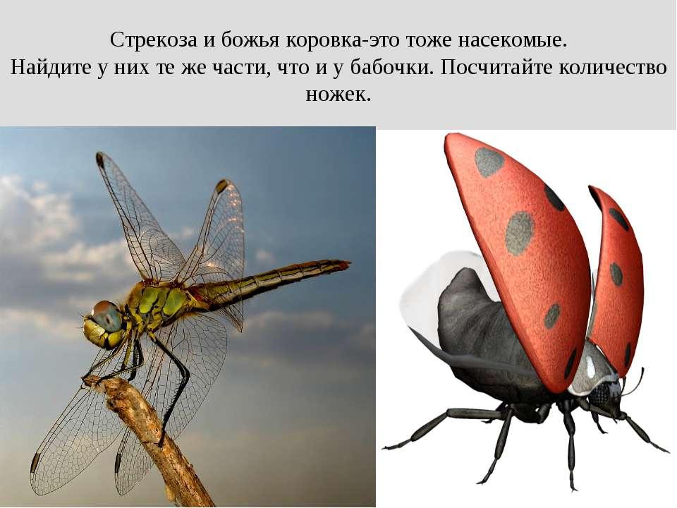 Стрекоза и божья коровка-это тоже насекомые. Найдите у них те же части, что и...