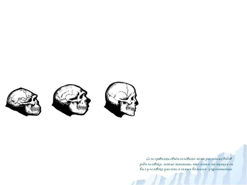 Если сравнить объём головного мозга различных видов рода человека, можно заме...