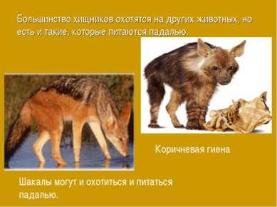 Большинство хищников охотятся на других животных, но есть и такие, которые пи...