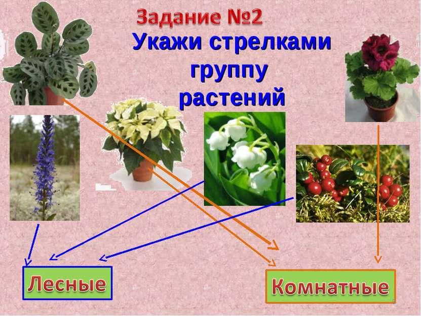 Укажи стрелками группу растений *