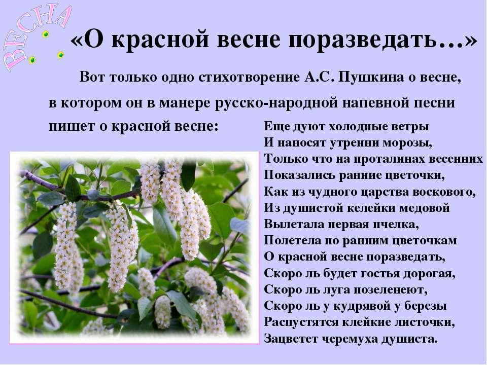 «О красной весне поразведать…» Еще дуют холодные ветры И наносят утренни моро...