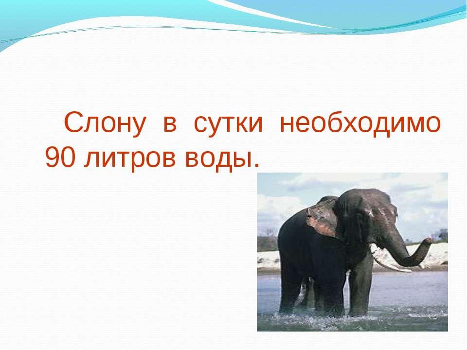 Слону в сутки необходимо 90 литров воды.