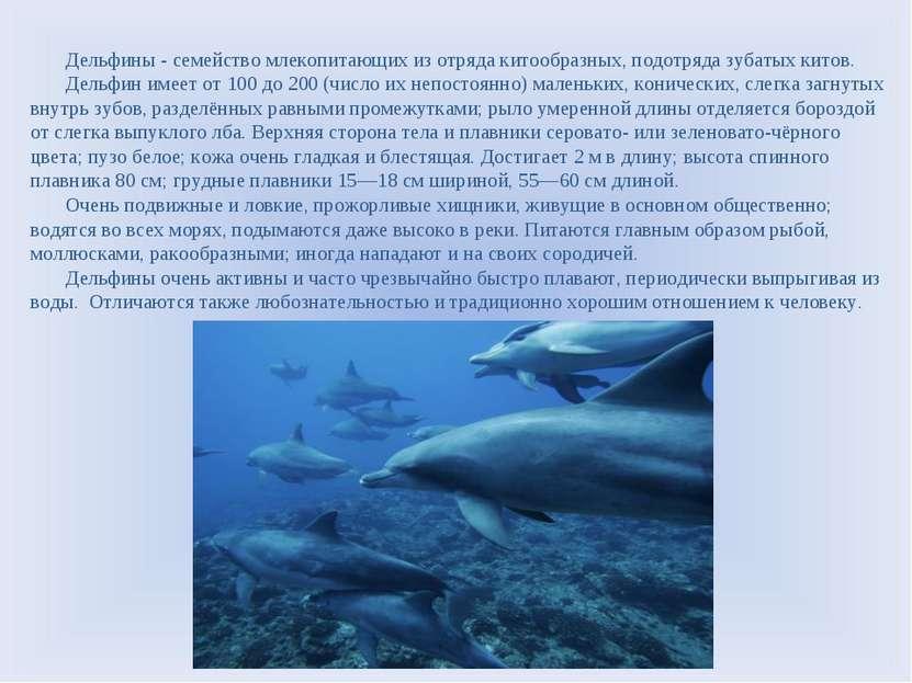 Дельфины - семейство млекопитающих из отряда китообразных, подотряда зубатых ...