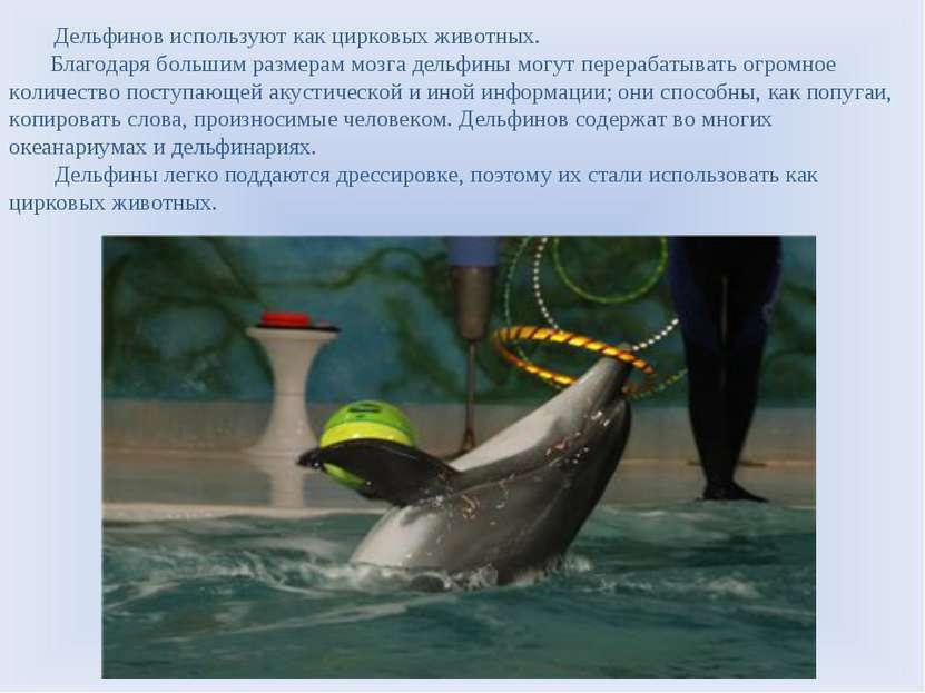 Дельфинов используют как цирковых животных. Благодаря большим размерам мозга ...