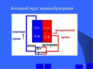 * Большой круг кровообращения П.П П.Ж. Л.П. Л.Ж. Все органы артерия вена арте...