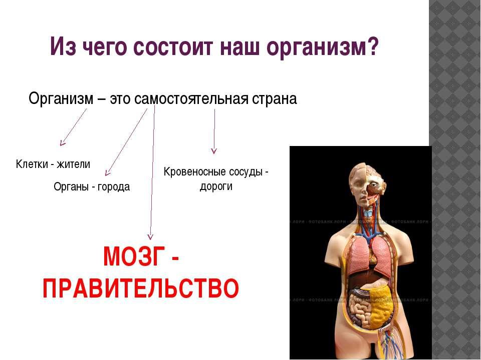 Из чего состоит наш организм? Организм – это самостоятельная страна Клетки - ...