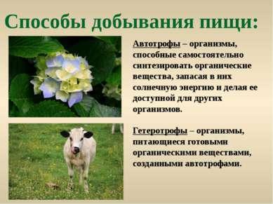 Способы добывания пищи: Автотрофы – организмы, способные самостоятельно синте...