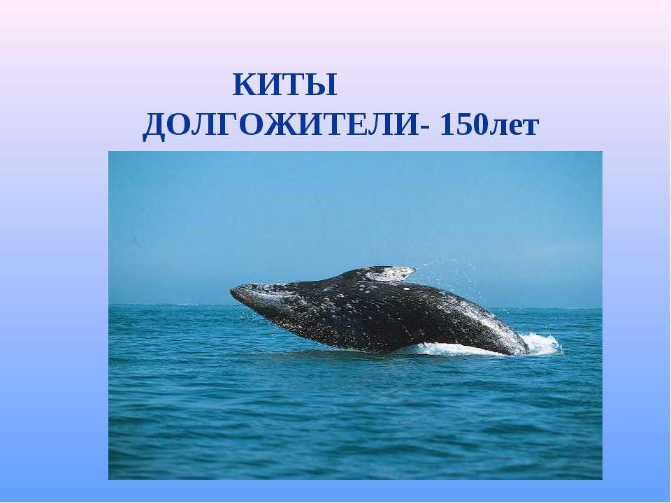 КИТЫ ДОЛГОЖИТЕЛИ- 150лет