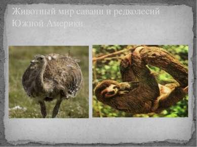 Животный мир саванн и редколесий Южной Америки