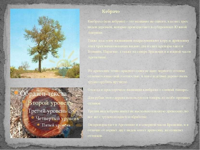 Квебрахо (или кебрачо) – это название не одного, а целых трех видов деревьев,...