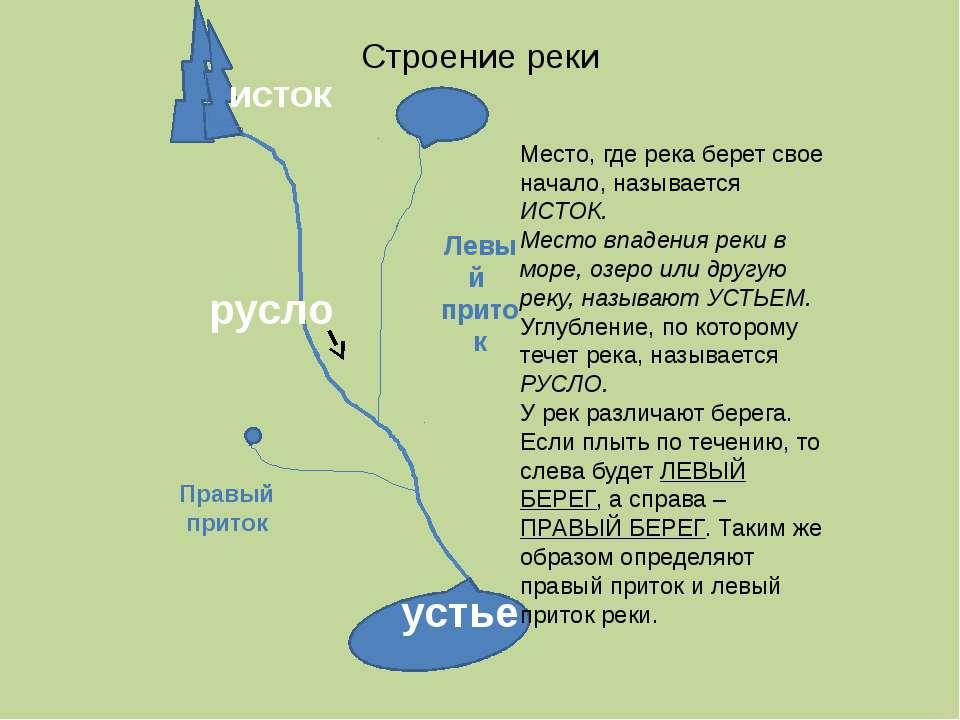 Строение реки исток устье Левый приток Правый приток Место, где река берет св...