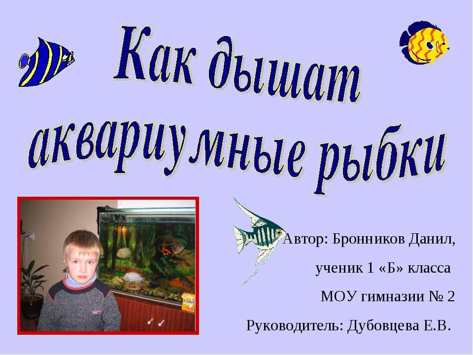 Автор: Бронников Данил, ученик 1 «Б» класса МОУ гимназии № 2 Руководитель: Ду...