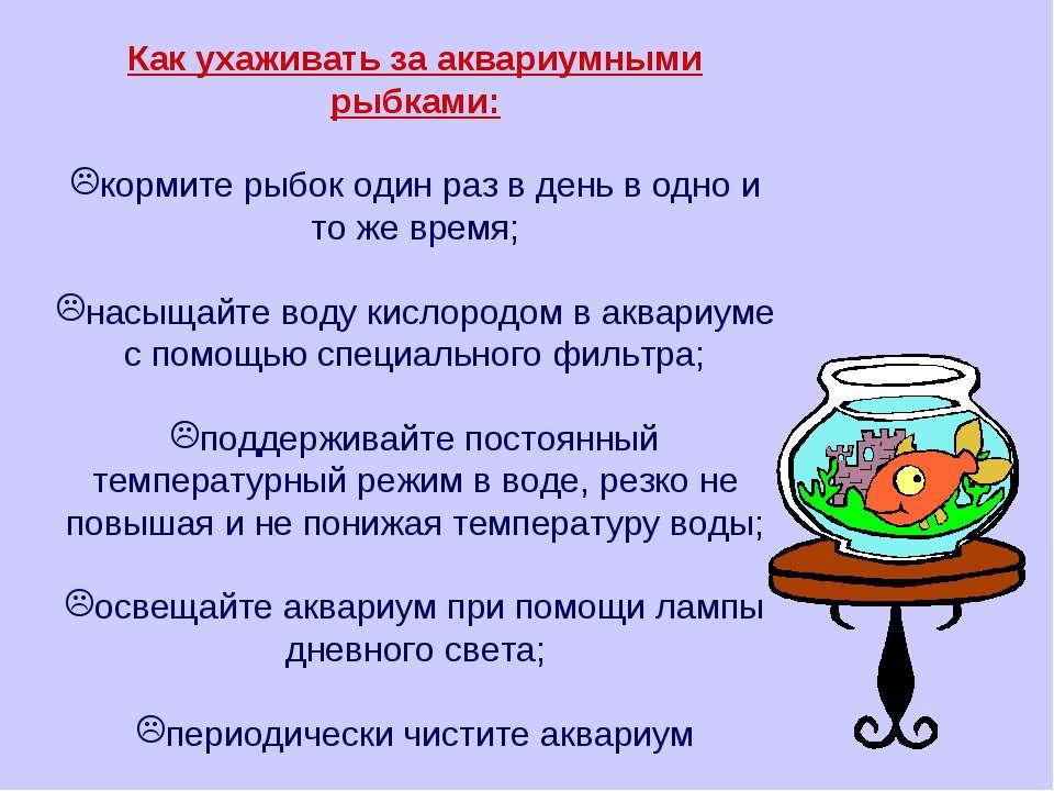 Как ухаживать за аквариумными рыбками: кормите рыбок один раз в день в одно и...