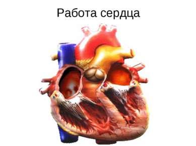Работа сердца