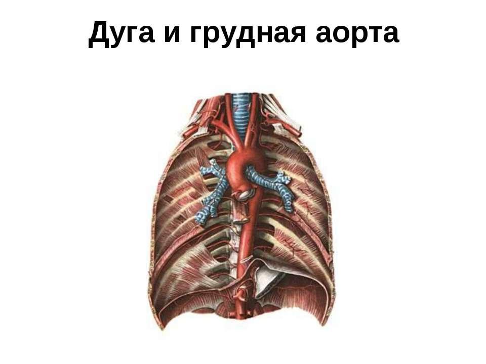 Дуга и грудная аорта