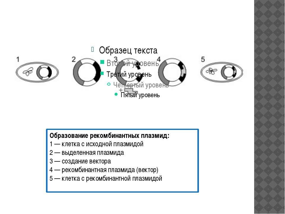 Образование рекомбинантных плазмид: 1— клетка с исходной плазмидой 2— выдел...