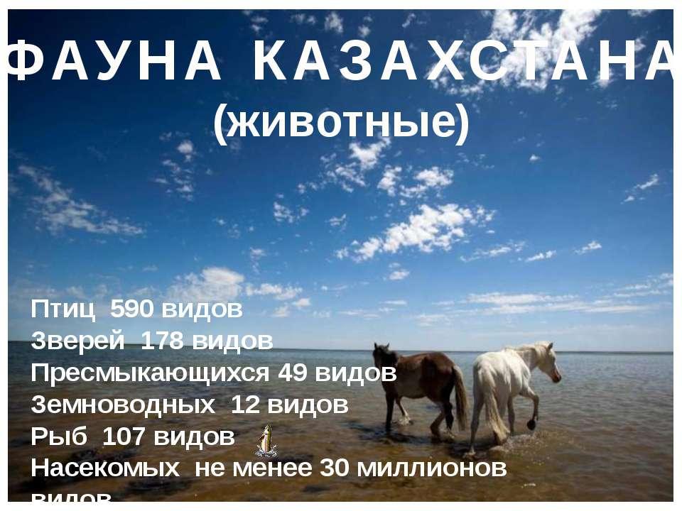 ФАУНА КАЗАХСТАНА (животные) Птиц 590 видов Зверей 178 видов Пресмыкающихся 49...