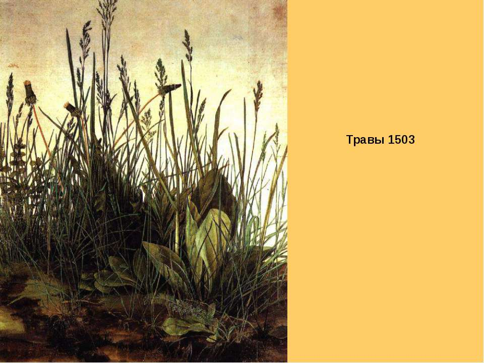 Травы 1503
