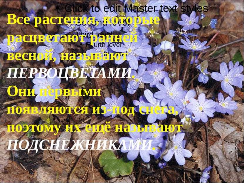 Все растения, которые расцветают ранней весной, называют ПЕРВОЦВЕТАМИ. Они пе...