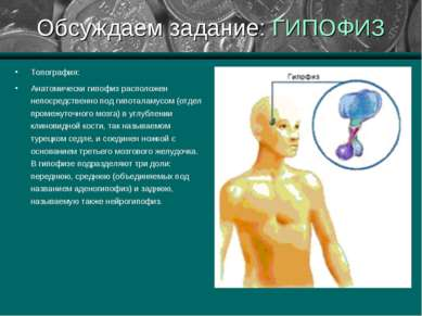 Обсуждаем задание: ГИПОФИЗ Топография: Анатомически гипофиз расположен непоср...