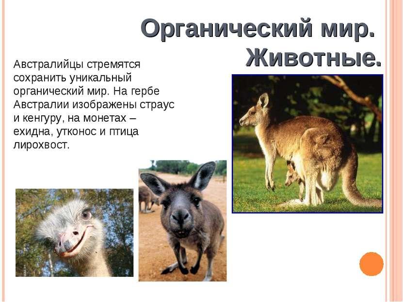 Органический мир. Животные. Австралийцы стремятся сохранить уникальный органи...