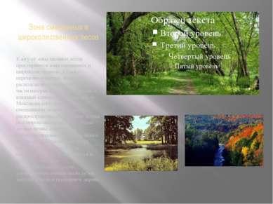 Зона смешенных и широколиственных лесов К югу от зоны хвойных лесов простираю...