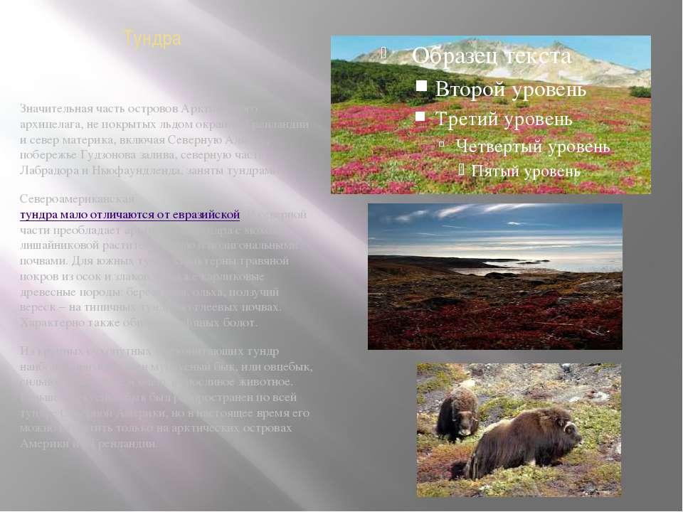 Тундра Значительная часть островов Арктического архипелага, не покрытых льдом...